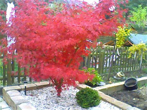 Baum Fur Schattigen Vorgarten