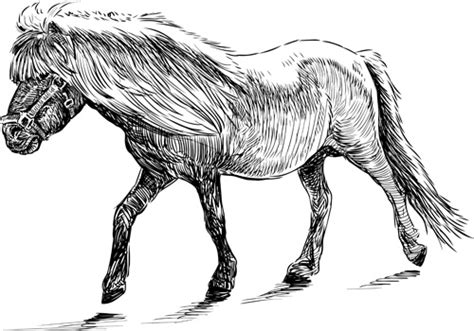 draw horse illustrator draw horses vector free vector in adobe illustrator ai