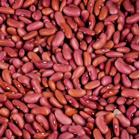 Shelf Dried Beans by Dried Light Kidney Beans 20 Lbs