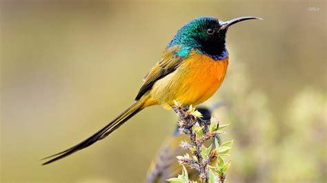 bird s bird