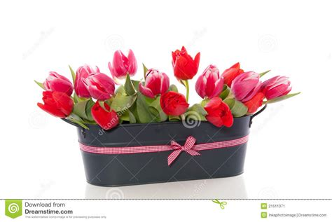 Blakc Reddish Flower S M L 44398 and pink tulip flowers stock image image 21511371