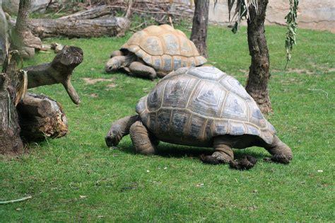 tartarughe da giardino come tenere le tartarughe di terra in giardino