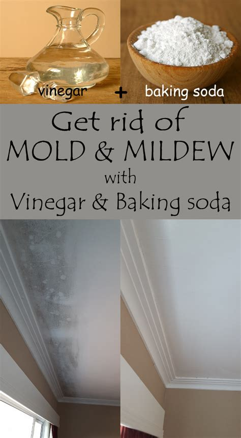 how to get rid of orange mold in bathroom get rid of mold and mildew with vinegar and baking soda