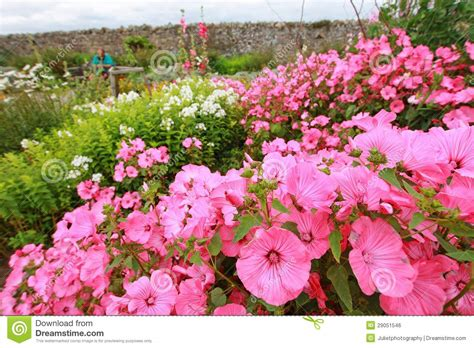 pink flower garden beautiful pink garden flowers royalty free stock image image 29051546