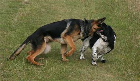 how to your not to attack other dogs aggression to other dogs and human aggressive behaviour