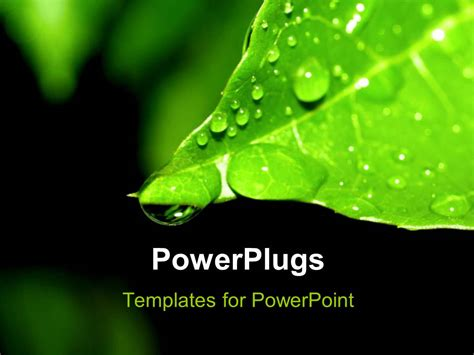 plants themes for powerpoint 2007 free download powerpoint template green plant leaf and water drop on