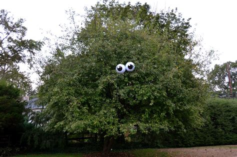 the princess and the frog blog eyeballs in a tree