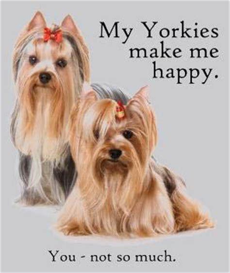 yorkie ta spoiled rotten yorkie on yorkie yorkies and terrier