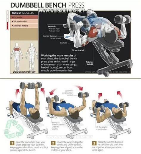 bench workouts for strength bench press chest building pectoral muscles and upper