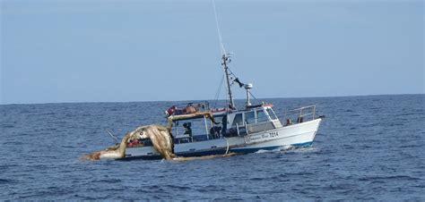 giant squid attacks fishing boat giant squid attacks taranaki vessel egmont seafoods