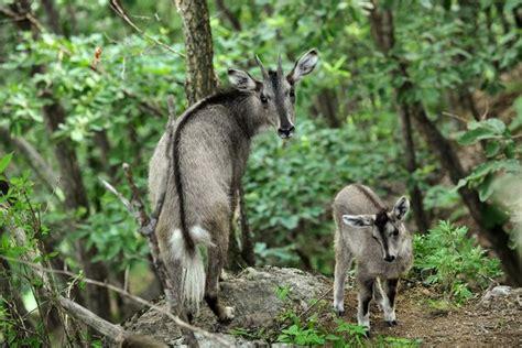 Gamis Korea Flera dmz wildlife peninsularity ensues