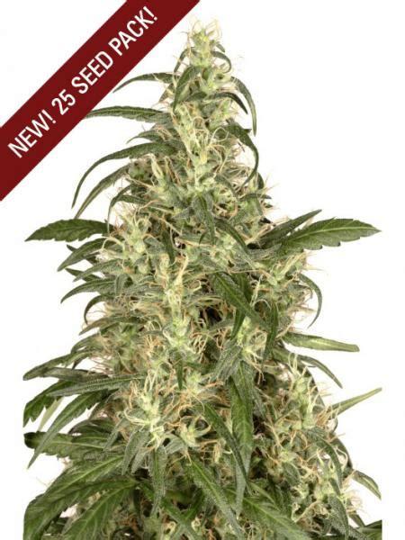 marijuana seed bank reviews pin skunk 11 marijuana seeds seed bank reviews on