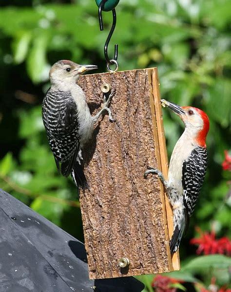 birds choice suet sandwich feeder