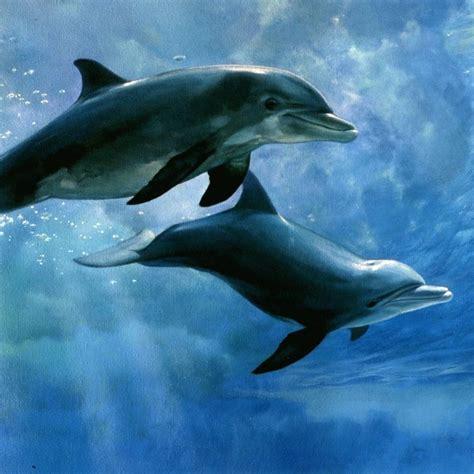 Dolphin Printable