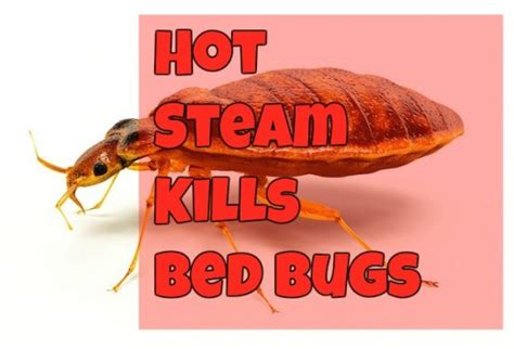 what kills bed bugs instantly steam and bed bugs hubpages
