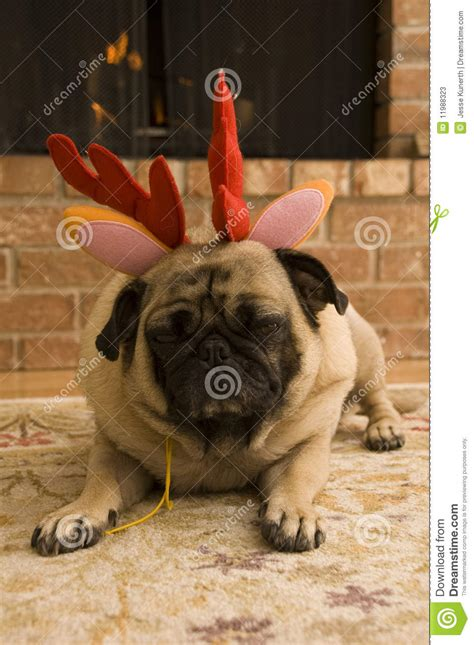 pug reindeer reindeer pug stock photos image 11988323