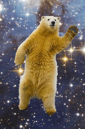 Dancing Polar Bear Meme - belly dancing polar bear gifs find share on giphy
