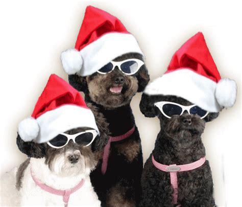 imagenes feliz navidad con perros gifs animados de bonitas y traviesas mascotas navide 241 as
