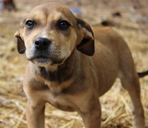 puppy boy image gallery puppy