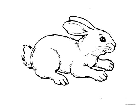 Animal Coloring Pages For To Print Out by Coloring Pages Print Out Animal Rabbit Pictures Colouring