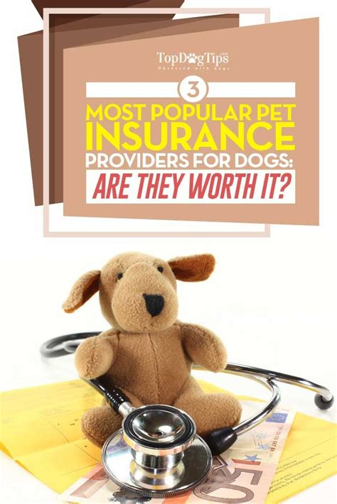 puppy vet visit cost 25 best ideas about pet insurance for dogs on