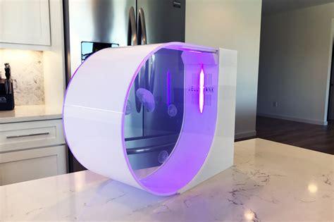 Jellyfish In Aquarium jellyfish tank buy live pet jellyfish desktop