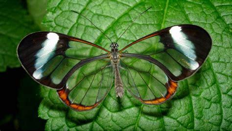 Tempat Minum Bentuk Kupu Kupu indahnya jenis kupu kupu langka ini ragam informasi