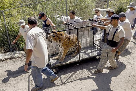 wildlife waystation animals return to enclosures after