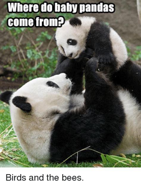 Sneezing Panda Meme - 25 best memes about baby pandas baby pandas memes