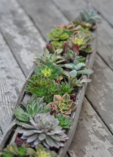 succulent planters sedum and succulent planters the garden glove