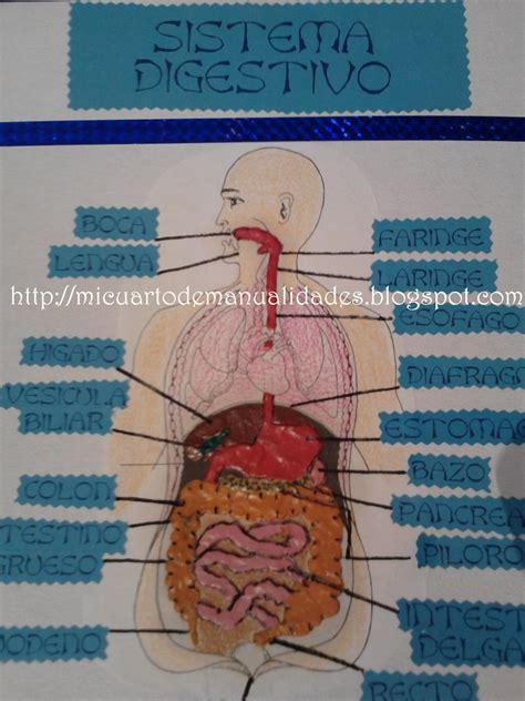 como hacer una maqueta del aparato digestivo de un gusano de tierra como hacer maquetas maqueta del sistema digestivo esta