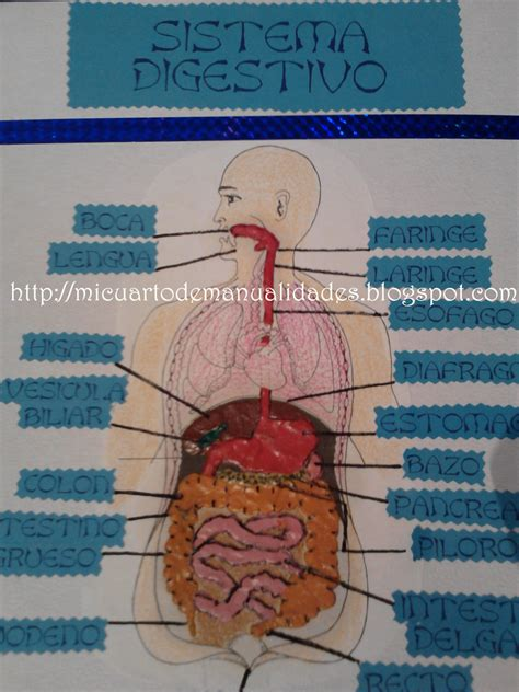 sistema digestivo reciclable ideas de manualidades sistema digestivo para ninos m 225 s