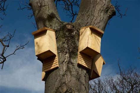 bat conservation international bat house plans download bat conservation international bat house plans plans free