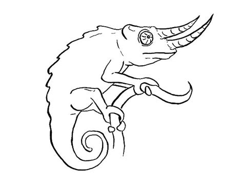 chameleon lizard coloring pages long nosed chameleon coloring pages best place to color