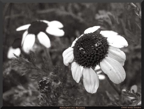 imagenes a negro flores sobre naturales
