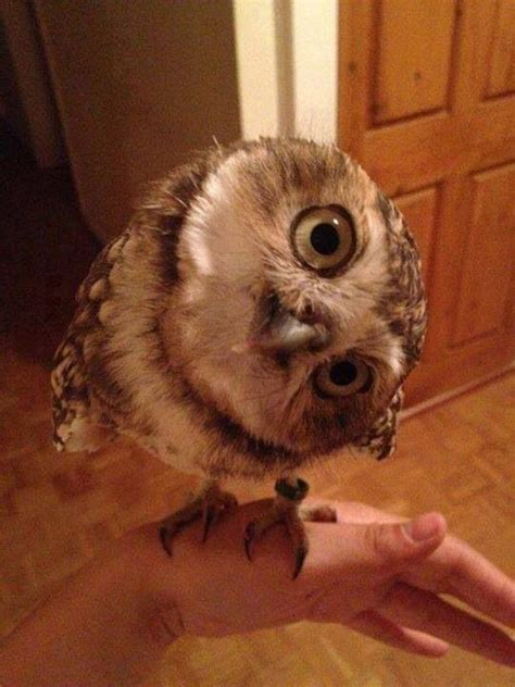 say whoo all things good pinterest