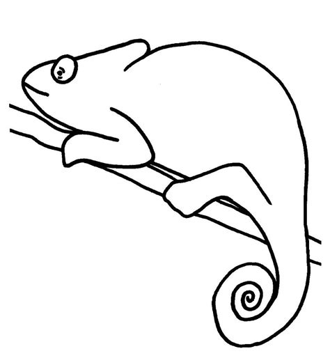chameleon template chameleon colouring pages
