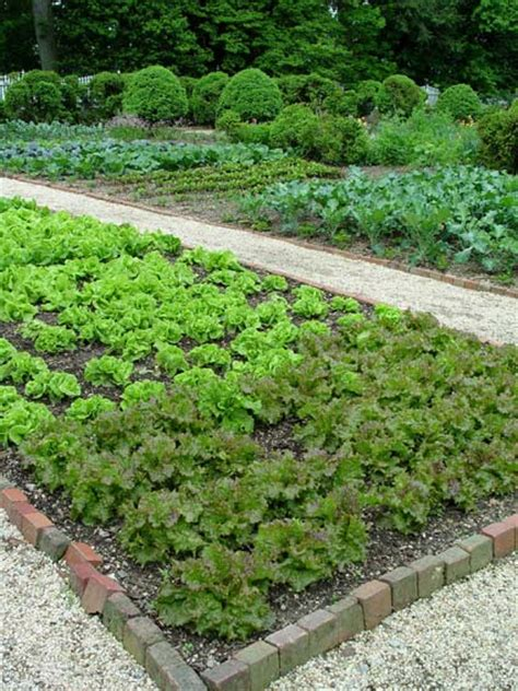 10 Tips On Growing Your Own Vegetable Garden Preen Preen For Vegetable Gardens