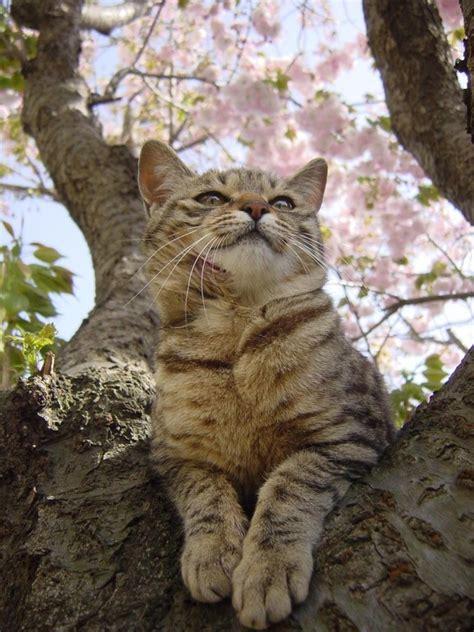 So Khusus Kucing 50 foto kucing dengan bunga yang terlalu imut untuk