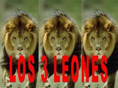 imagenes de tres leones juntos los tres leones