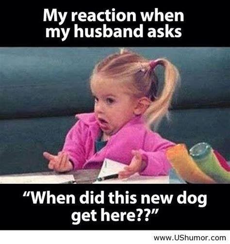Funny Husband Memes - my reaction when my husband asks us humor funny pictures
