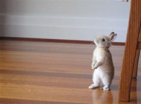 like a bunny cutest bunnies