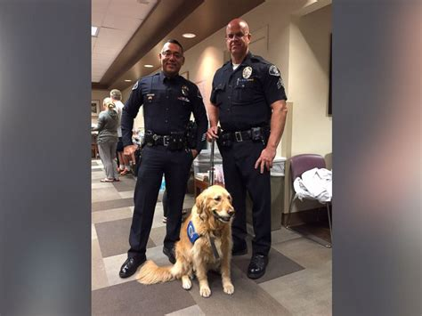 comfort dogs therapy dogs comfort survivors of las vegas shooting abc news