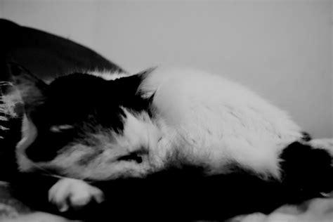 imagenes blanco y negro de gatos perros y gatos en blanco y negro imagenes propias taringa