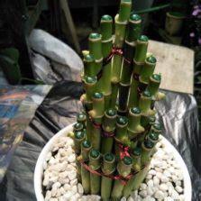 cara membuat siomay hoki cara membuat tanaman hias mini indoor dan outdoor