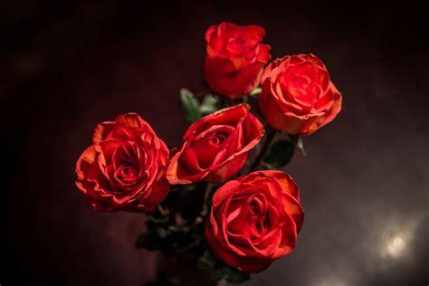 imagenes rojas tumblr imagen de rosas rojas foto gratis