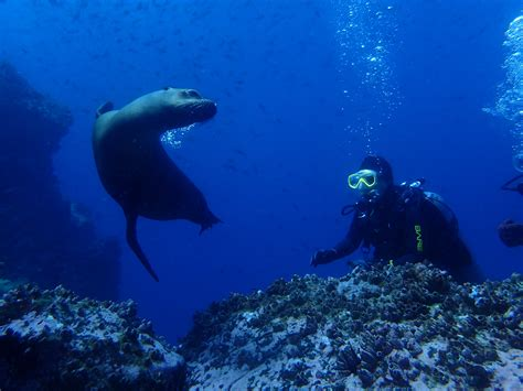 scuba diving galapagos ecuador academy bay diving