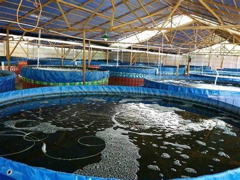 Jual Kolam Terpal Ikan 1 pusat penjualan kolam terpal bulat berkualitas