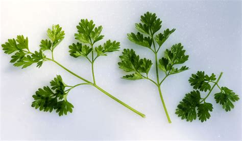 Home And Garden Kitchen Design Ideas All About Chervil Tips To Use A Delicate Spring Herb
