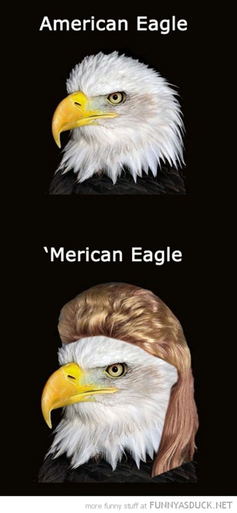 Eagles Memes - best 25 eagles memes ideas on pinterest the eagles